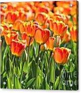 Spring In Beantown Acrylic Print