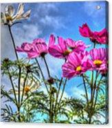 Spring In Full Swing Acrylic Print