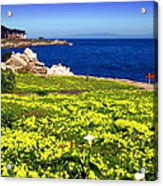 Spring In Pacific Grove Ca Acrylic Print