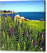 Spring In Pacific Grove Ca Two Acrylic Print