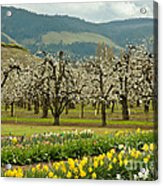 Spring In The Hood River Valley Acrylic Print