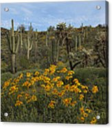 Spring In The Superstition Wilderness Acrylic Print