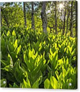 Spring In The Wasatch Acrylic Print