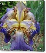 Spring Iris Acrylic Print