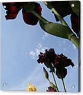 Spring Iris Skies Acrylic Print