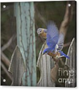 Spring Is Coming I Acrylic Print