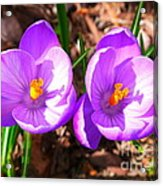 Spring Is Here Acrylic Print