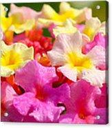 Spring Lantana Acrylic Print by James Hammen