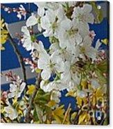 Spring Life In Still-life Acrylic Print