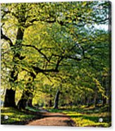 Spring Light  Acrylic Print by Tim Gainey