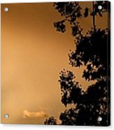 Spring Maple Silhouette Acrylic Print