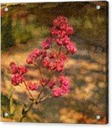 Spring Mignonette Flower Acrylic Print