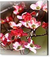 Blossoms In The Spring Acrylic Print