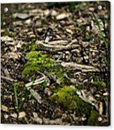 Spring Moss Acrylic Print