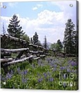Spring Mountain Lupines 2 Acrylic Print