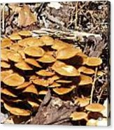 Spring Mushrooms 2 Acrylic Print