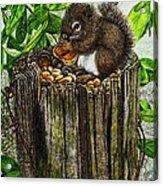 Spring Nuts Acrylic Print