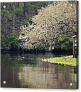 Spring On The Ashely River Acrylic Print
