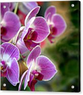 Spring Orchids I Acrylic Print