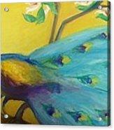 Spring Peacock Acrylic Print