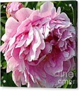 Spring Peony Acrylic Print