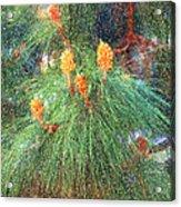 Spring Pine Acrylic Print