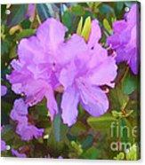 Spring Pink Azalea Acrylic Print
