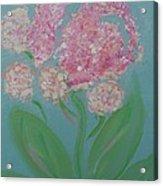 Spring Pink Flowers 1 Acrylic Print