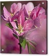Spring Pink... Acrylic Print