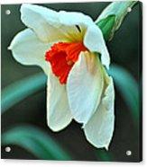 Spring Prayer Acrylic Print