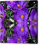 Spring Reflection Acrylic Print