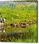 Spring Reflection Acrylic Print by Thomas Pettengill
