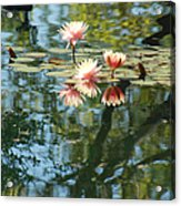 Spring Reflections Acrylic Print