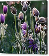Spring Remembered Acrylic Print