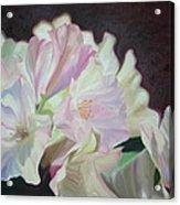 Spring Rhodys Acrylic Print