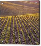 Spring Rows Acrylic Print