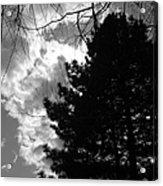Spring Sky And Pine 1 Bw Acrylic Print