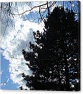 Spring Sky And Pine 1 Acrylic Print
