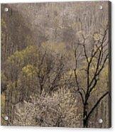 Spring Snow Acrylic Print
