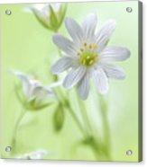 Spring Sparkle Acrylic Print