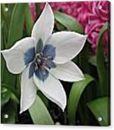 Spring Star Acrylic Print