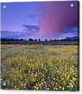 Spring Storm At Andalucia Acrylic Print