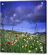 Spring Sunset Windy Days Acrylic Print
