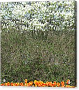 Spring Time Blooms Acrylic Print