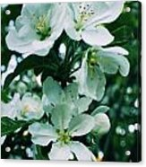 Spring Time Blossoms Acrylic Print