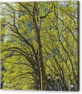 Spring Time In Bryant Park New York Acrylic Print by Angela A Stanton