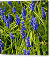 Spring Time Acrylic Print
