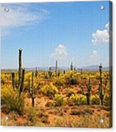 Spring Time On The Rolls - Arizona. Acrylic Print