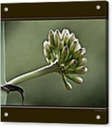 Spring To Life Acrylic Print