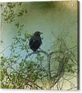 Spring Tree And Crow Acrylic Print